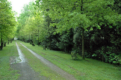 Πάρκο του Κάσελ. Οι βελανιδιές έχουν θεριέψει δίπλα στις στήλες βασάλτη.