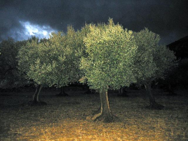 _dark olive109-0997
