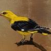 Νεκτάριος Αποσπόρης: Ζωγραφίζει τα πουλιά της Ελλάδας