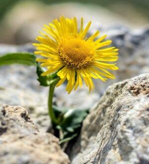 Η Ελπίδα γεννιέται μέσα απ' τις πέτρες
